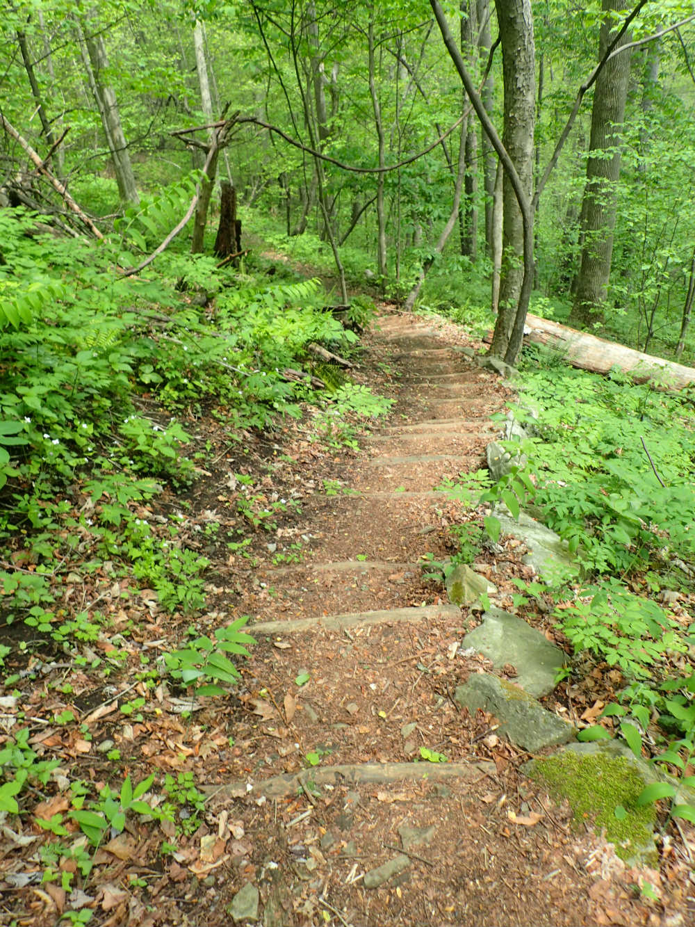 Steps on Wildcat Trail