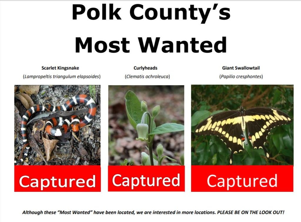 "Polk County's Most Wanted ""captured"" poster"