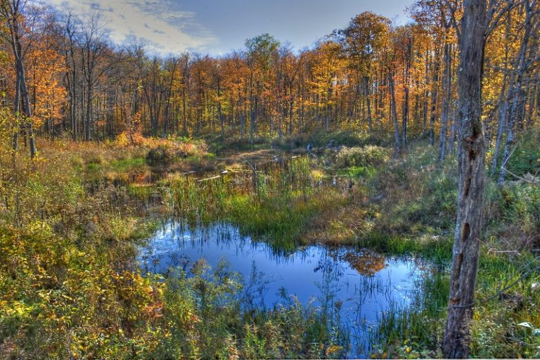 Mountain Bog in Headwaters State Forest