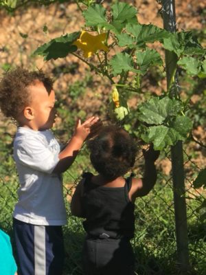 Checking out squash vines