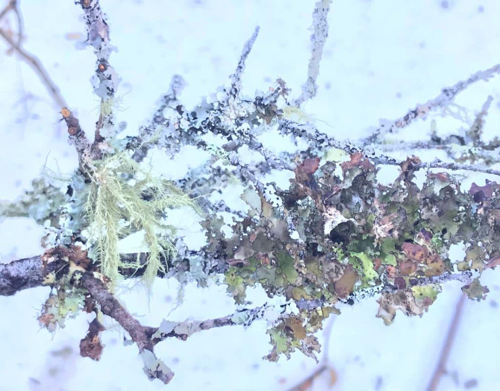 Multicolored lichens and moss