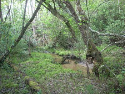 Sphagnum wetland