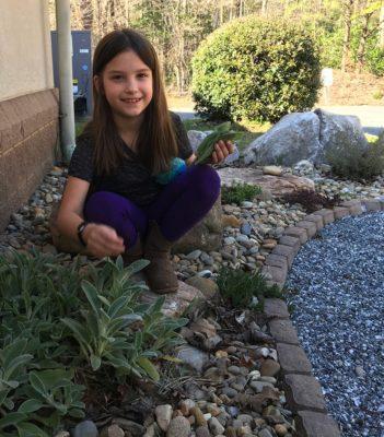 Delaney picks lambs ear for a fairy garden.