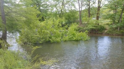 Tree down across the French Broad in May, 2019