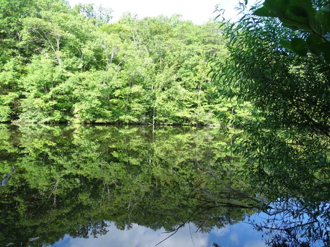 Pond at Little White Oak Mountain
