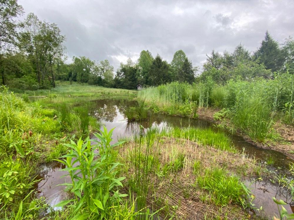 Restored wetland at Carolina Memorial Sanctuary