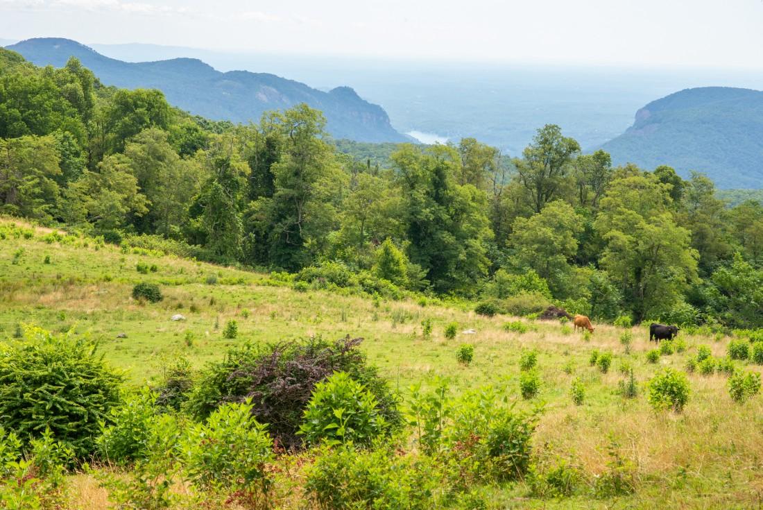 Ridgeline meadow on Little Bearwallow Mountain