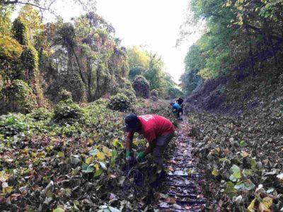Melrose Falls Volunteer Workday