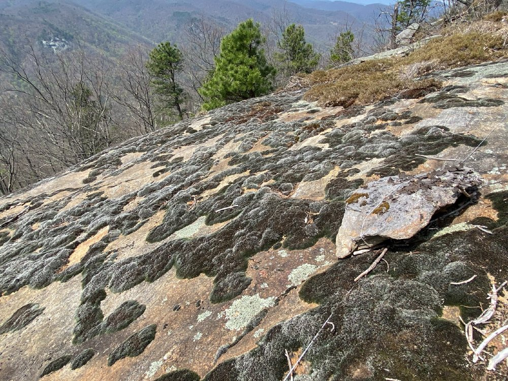 Lichens on Youngs Mountain Summit