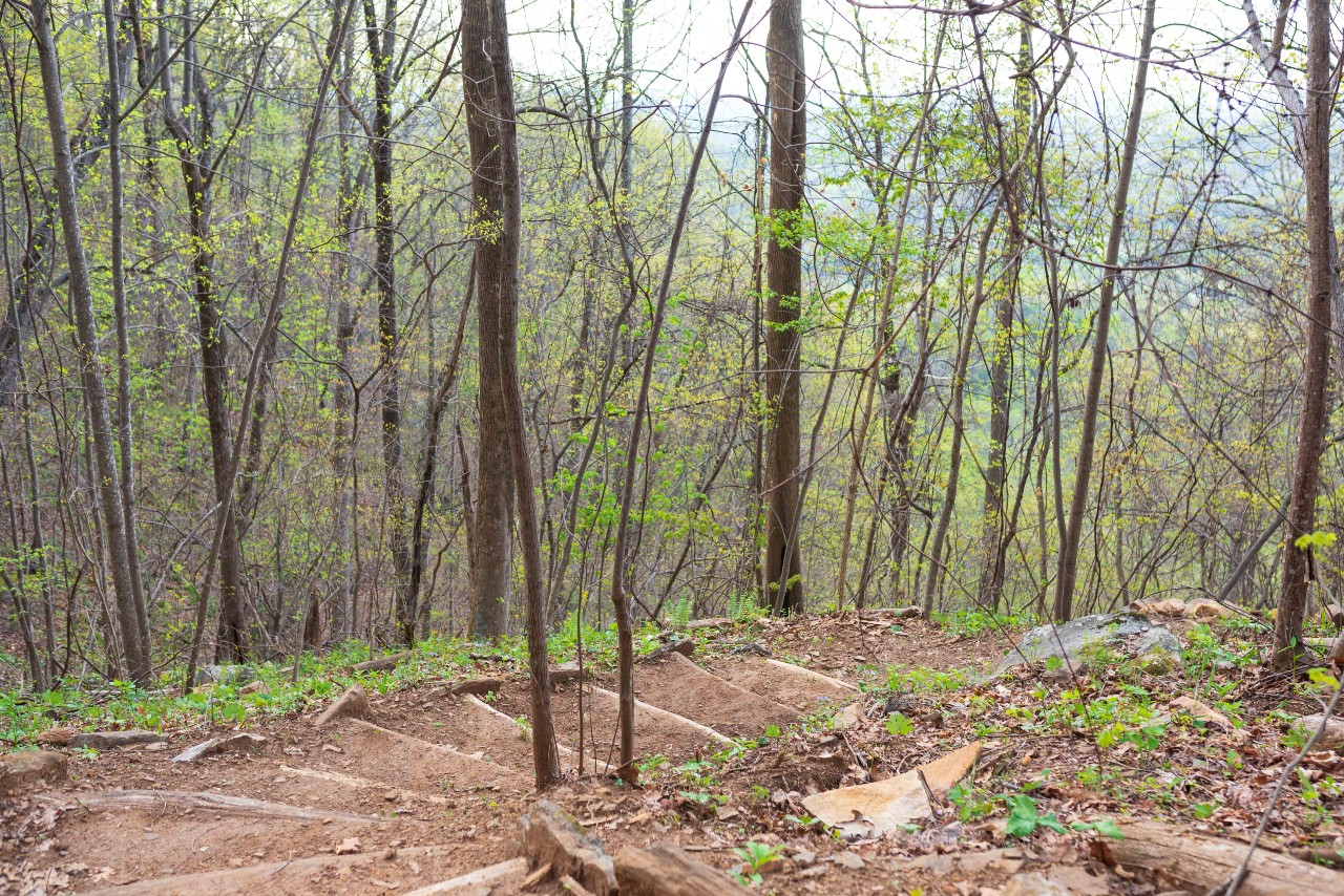 Steps on Youngs Mountain Trail. By Pat Barcas.